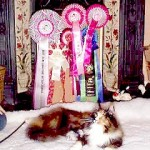 Best in Show Semi-Longhaired Kitten at the Capital Long Hair Cat Association Show 9th January 1999